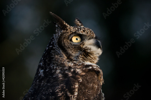 Wall mural Eagle Owl