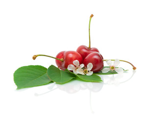 cherry fruit, leaves and cherry blossoms on a white background