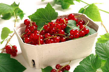 Red currant - Ribes rubrum