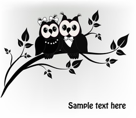 Two black and white on a black owl tree