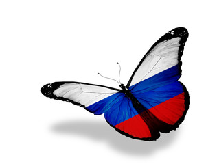 Russian flag butterfly flying, isolated on white background