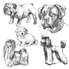 hand drawn dogs