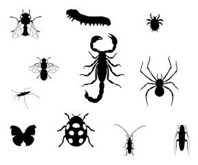 Plaquette d'insectes