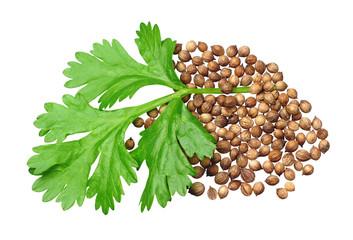 Fototapeta Green coriander and grains obraz