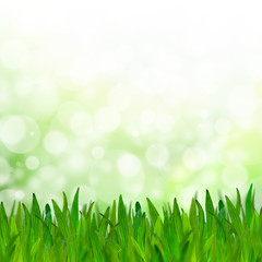 Abstract green tone bokeh background with green grass.