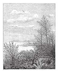Jurassic Period, vintage engraving
