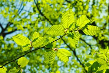 knackig grüne Blätter