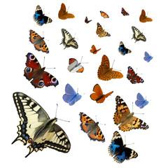 Davonfliegende Schmetterlinge isoliert