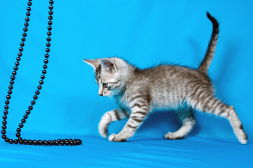small kitten with a beads