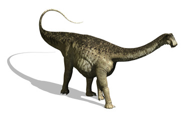 Search photos sauropod