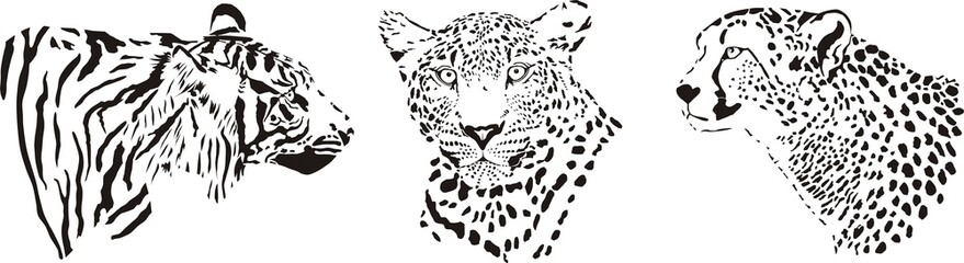 Head of cheetah, leopard and tiger