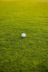 Golf ball on the field