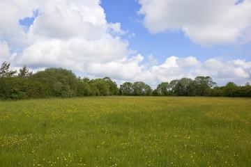 wildflower hay meadow