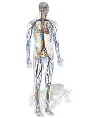 Anatomisches Modell eines Menschen