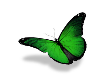 Green butterfly flying, isolated on white background