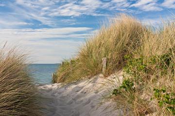 Wall Mural - Weg zum Strand durch Dünen mit Strandhafer an der Ostsee