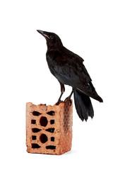 Fototapete - Black bird on a brick fragment