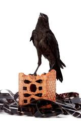 Fototapete - Black bird on a brick fragment in a heap of a film