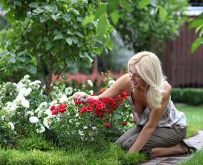 Gardening - woman cutting the rose bush in the garden