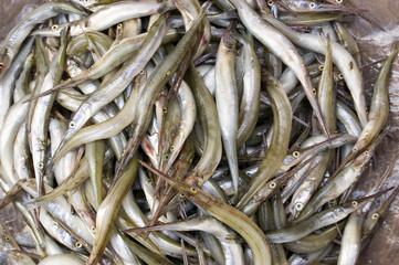 Needlenose Gar fish in a Cambodian Market