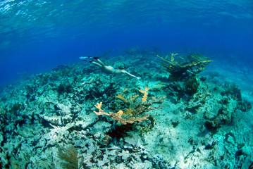 Wall Mural - Woman snorkeling on coral reef