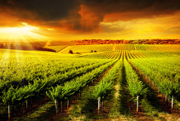 Wall Mural - Stunning Vineyard Sunset