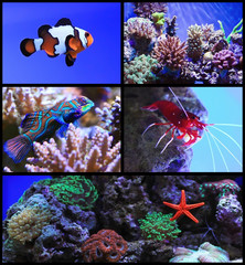 Tropical exotic fish and coral reef