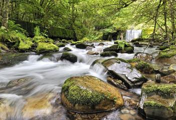 Dentro del bosque de Muniellos en Asturias.