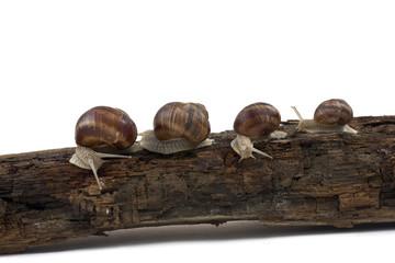 four snails