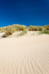 Sand dunes with beach grass in The Netherlands