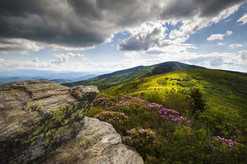 Appalachian Landscape Roan Mountain Flowers NC Spring Blooms