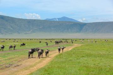 Crater Ngorongoro, Tanzania