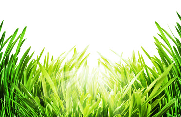 Green grass under bright sun. Abstract still life over white bac