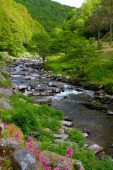 Walk up river from Lynmouth to Watersmeet Devon