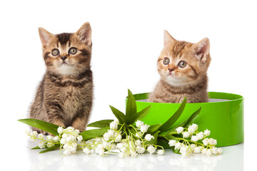 kittens in green gift box isolated on white.