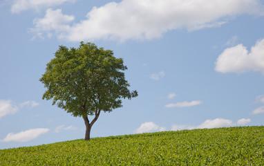 Baum mit Wiese III