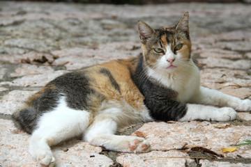 Katze in Italien