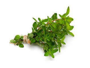 tied thyme