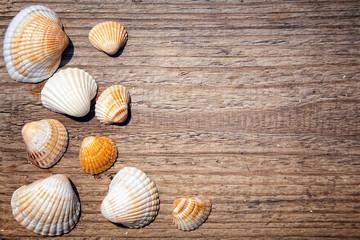 Seashells on a wooden deck