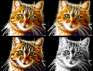 Immagine di gatto