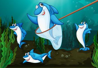 Wall Murals Submarine shark fish