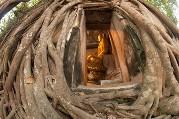 Ancient Thai church cover by root tree in Middle of Thailand.