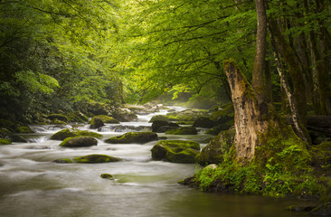 Deurstickers Rivier Great Smoky Mountains National Park Foggy Tremont River
