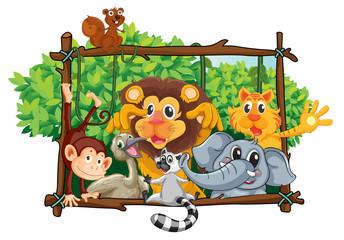 Foto auf Leinwand Waldtiere various animals