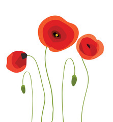 Poppies Spring vector