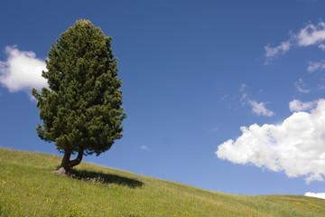 Paesaggio prato verde con albero