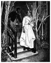 Creole Woman