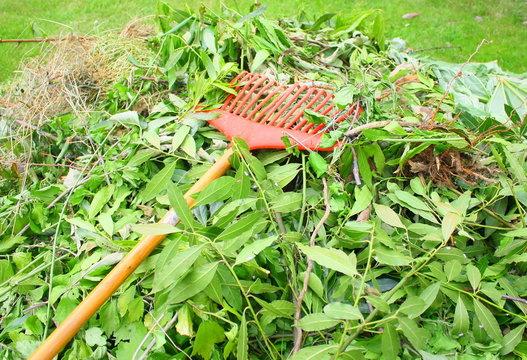 compost de branchages