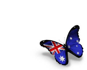 Australian flag butterfly, isolated on white background