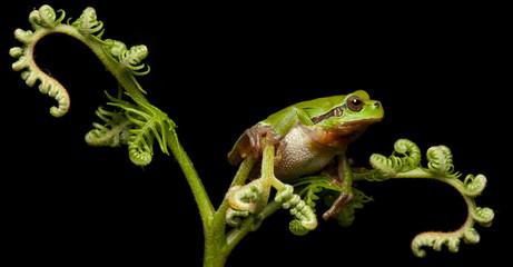 tree frog on fern at night